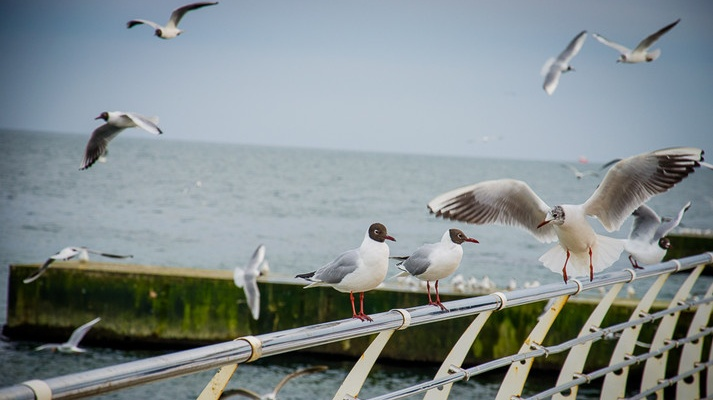-чайки.jpg
