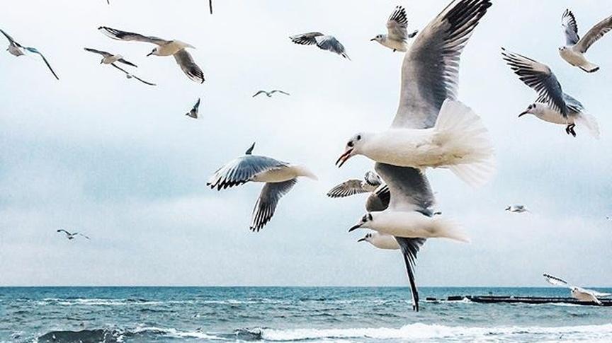-чайки-Cropped.jpg