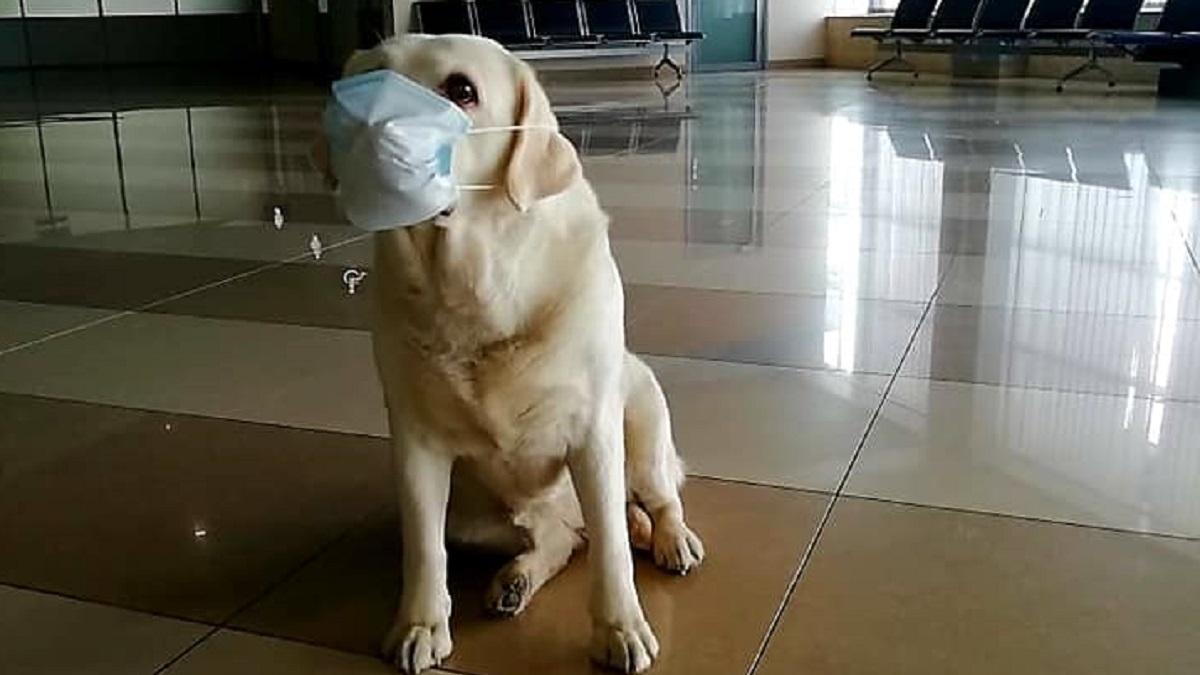 -собака.jpg
