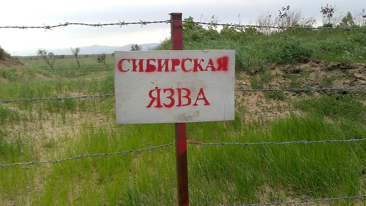 sibirskaya_yazva-Cropped.jpg