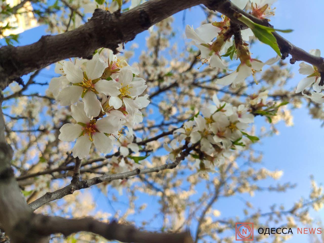 photo_2021-04-21_18-06-39.jpg